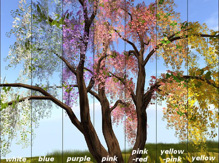 Golden Shower Tree 7xcolors M/T
