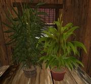 Potted plants, each 1 LI