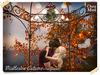 Mistlestoe autumn 3