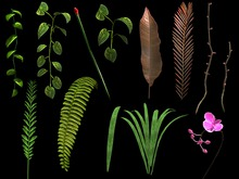 Stems and Leaves Assorted - Pack