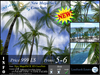 NEW 3D PALMS CocoNuts V2