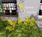 Spring flower pop 010