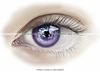 Elysian (Purple) Catwa | Omega