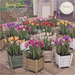 {what next} 'Spring Bloom' Tulip Planters - Full Set