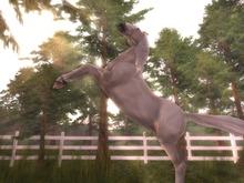 *TPT* Animated Teegle Horse Gestures Vol 1