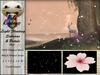 pr  light floating sakuras   petals   pink