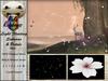 [PR] Light Floating Sakuras & Petals - White (Boxed)