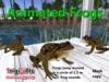 Animated frogsadsmall