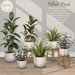 {what next} House Plants 1 - Set of 3