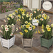 {what next} 'Spring Bloom' Daffodil Planters - Full Set
