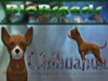 BioBreeds (BB) Dog MALE Chihuahua STARTER (Boxed)