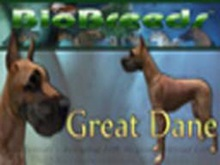 BioBreeds (BB) Dog FEMALE Great Dane STARTER (Boxed)