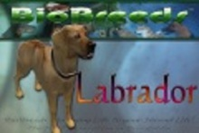 BioBreeds (BB) Dog MALE Labrador STARTER (Boxed)