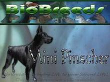 BioBreeds (BB) Dog FEMALE MinPin (Miniature Pinscher) STARTER (Boxed)