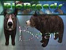 BioBreeds (BB) Wild Ones FEMALE BEAR STARTER (Boxed)