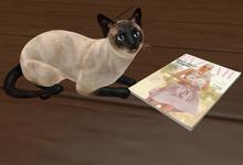 {ACD} Kitty's Magazine