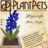 PlantPet Seed [Hyacinth *Blue Magic*] RARE