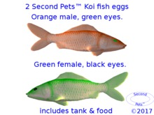 Two Koi eggs package Orange & Green