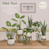 {what next} House Plants 2 - Set of 3