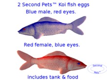 Two Koi eggs package Blue & Red