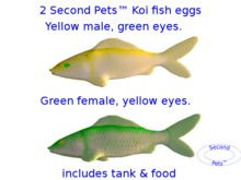 Two Koi Fish Eggs Yellow Male and Green Female