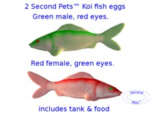 Two Koi eggs package Green & Red
