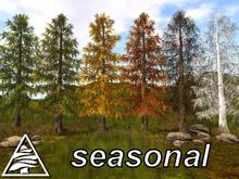 LARCH FOREST SEASONAL M/T