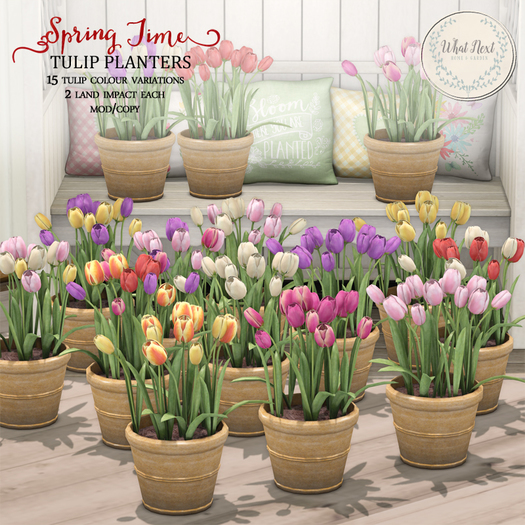 {what next} Springtime Tulips Planters (boxed)