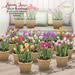 What next spring time tulip planters 800
