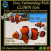 FREE SWIMMING FISH - CLOWN Fish - UPDATE 2017