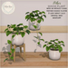 {what next} Pothos House Plant (boxed)