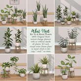 {what next} House Plants - Set of 6 (100% Mesh)
