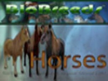 BioBreeds (BB) Horses FEMALE Horse STARTER (Boxed)