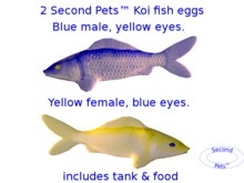 Two Koi eggs package Blue & Yellow