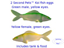 Two Koi Fish Eggs Green Male and Yellow Female