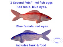 Two Koi Fish Eggs Red Male and Blue Female