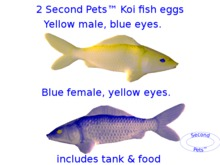 Two Koi eggs package Yellow & Blue
