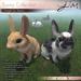 JIAN Straight Ear Bunny Collection