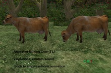 Animated Milking Cow, 3 LI