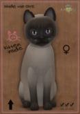 KittyCatS Box - Tonkinese Blue Mink