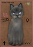 KittyCatS Box - Tonkinese Blue Mink Tortie