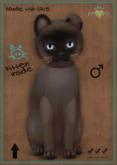 KittyCatS Box - Burmese Sable