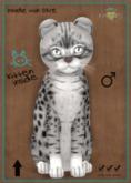KittyCatS Box - Ocicat Ebony Silver