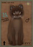 KittyCatS Box - Abyssinian Ruddy