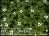 Heart - WILD FLOWERS - Bunchberry