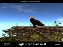 Gaagii - Eagle sized Bird nest