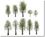 Mesh maple forest building set 12 module  10 trees copy mody14