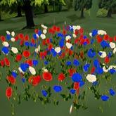 Patriotic Poppy Flower Field