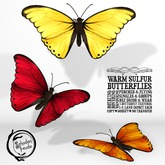 Schadenfreude Warm Sulfur Butterflies