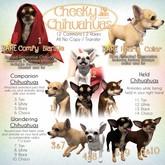 JIAN Cheeky Chihuahuas BOX 11. Tan Held